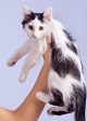 Peripheral blood analysis shows benefit of peptide immunotherapy for cat allergy